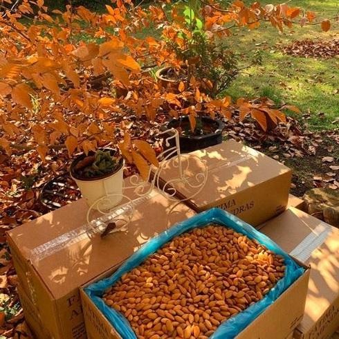 Almendras - Just Nuts