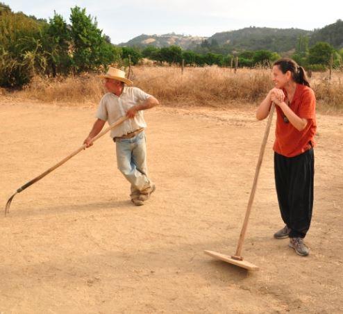 Legumbres y granos - Cosecha Justa