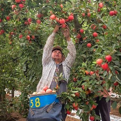 Frutas - El Mansana